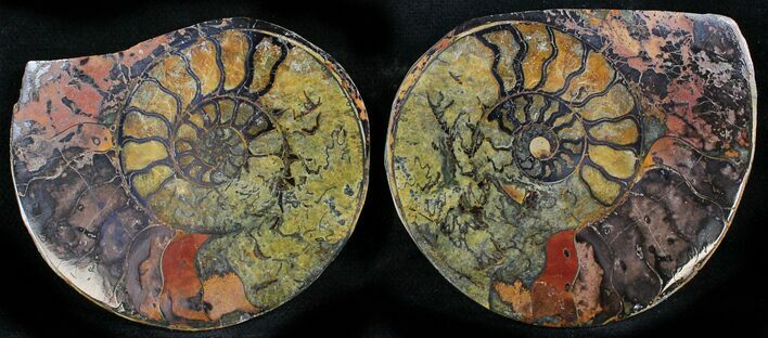 "2.2"" Iron Replaced Ammonite Fossil Pair"
